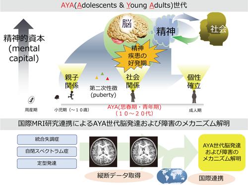 国際MRI研究連携によるAYA世代脳発達および障害のメカニズム解明