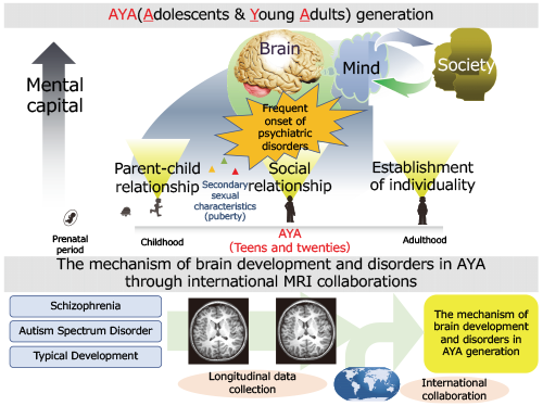 The mechanism of brain development and disorders in adolescence and young adulthood (AYA) through international MRI collaborations