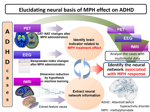 Elucidation of neural basis of pharmacotherapy for attention-deficit hyperactivity disorder