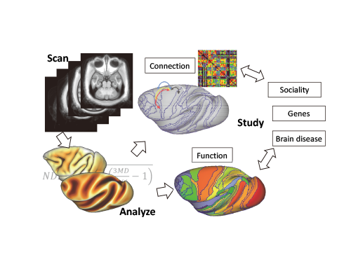 Primate Connectomics using Multimodal Standardized Neuroimaging